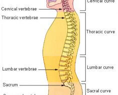 Neck and Back Outcome Of Poor Posture