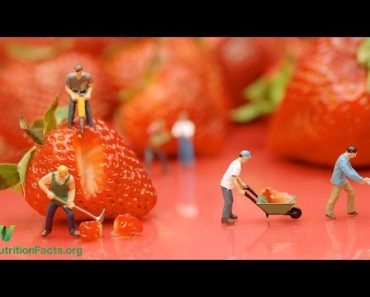 Health LifeStyle Introduction to Food Health